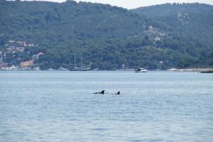 sabeeapp dolphins
